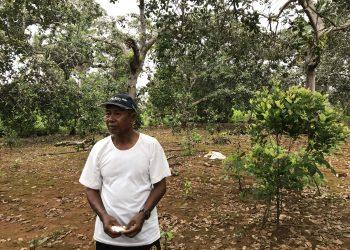 Abdul Majid, di lahan yang ditumbuhi ratusan pohon mete. Lahan ini tidak mau dia lepaskan kepada perusahaan. Memberikan lahan kepada perusahaan sama dengan bertaruh nyawa. Foto: Kamarudin/ Mongabay Indonesia