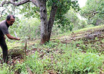 Rasyid (61), warga Desa Roko-roko, Kecamatan Wawonii Tenggara, Kabupaten Konawe Kepulauan, Sulawesi Tenggara, memotong rumput di kebun metenya, Sabtu (16/3/2019). Berkat mete, Rasyid bisa menyekolahkan anak-anak dan menyejahterakan keluarganya.